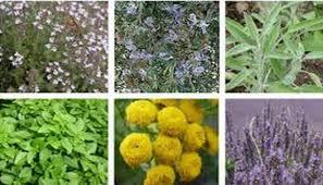 plantes anti stress